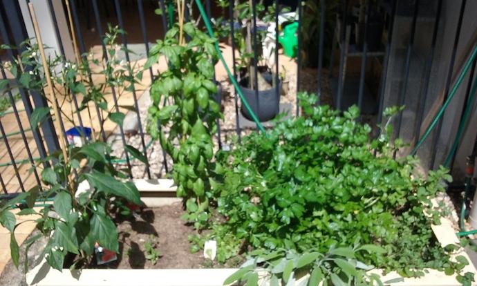 Herb Garden 07.08.2020