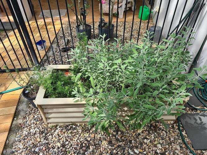 Herb Garden 06.09.2021